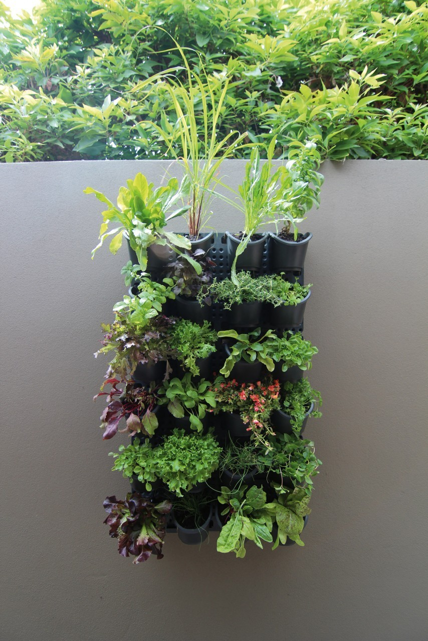 Mur Vegetal En Kit destock - kit mur vegetalise modulable